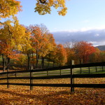 Birch Hill Paddocks in the Autumn