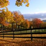 Birch Hill Paddocks in the Autumn